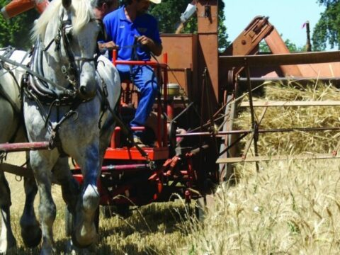 17th Annual Old-Fashioned Country Faire & Threshing Bee